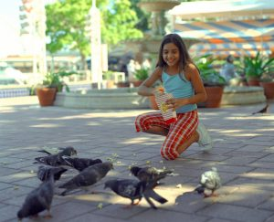 Local California University Using Pigeons to Monitor Lead Pollution