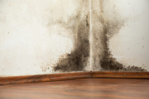 Mold Can be Lurking in Your Home