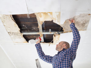 The Most Common Places That Mold Can Grow in Your Home
