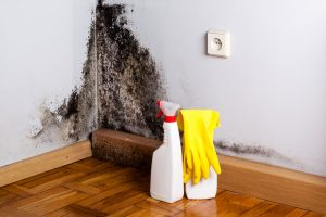 Gain Independence from Mold in Your Home!
